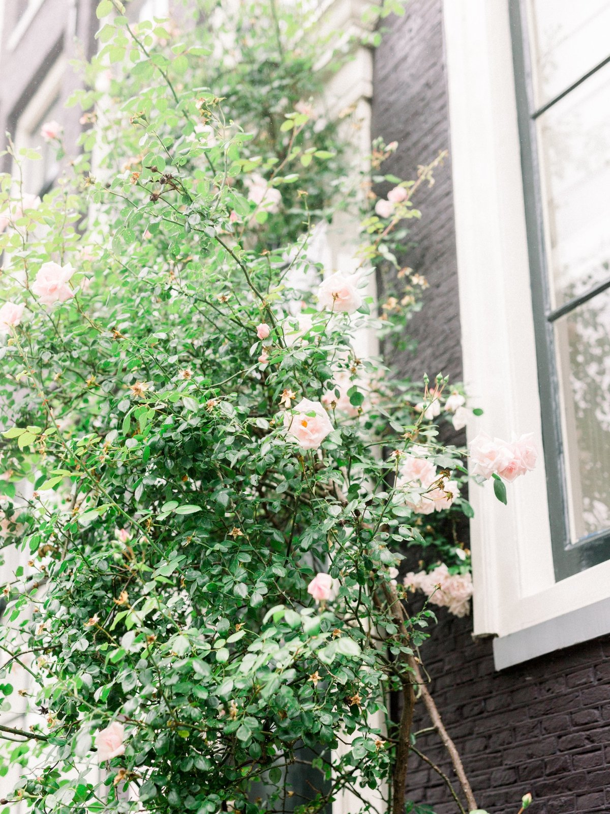 Erwin+Lydia_Amsterdam-Anniversary-Session_MichelleWeverPhotography-20