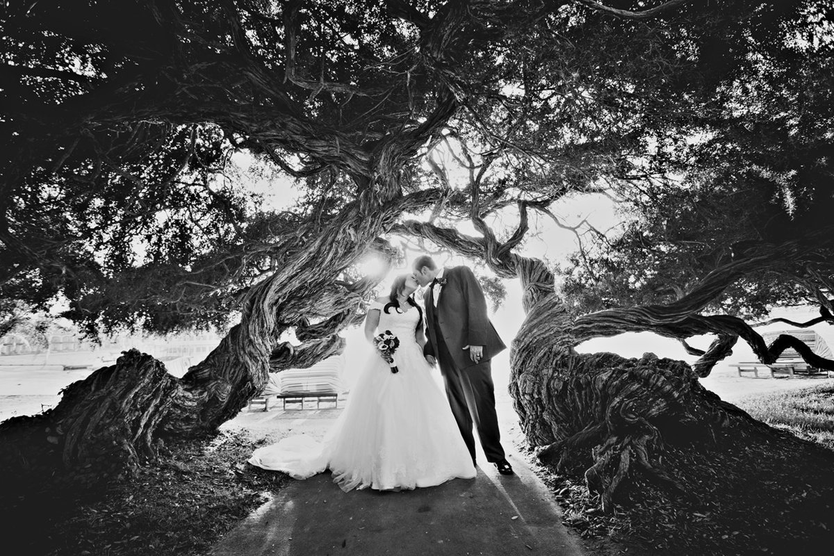 Sunset Cliffs wedding photos trees black and white