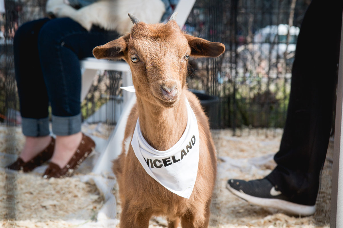 Viceland Goat - Erica Fuchs @forest_taurus