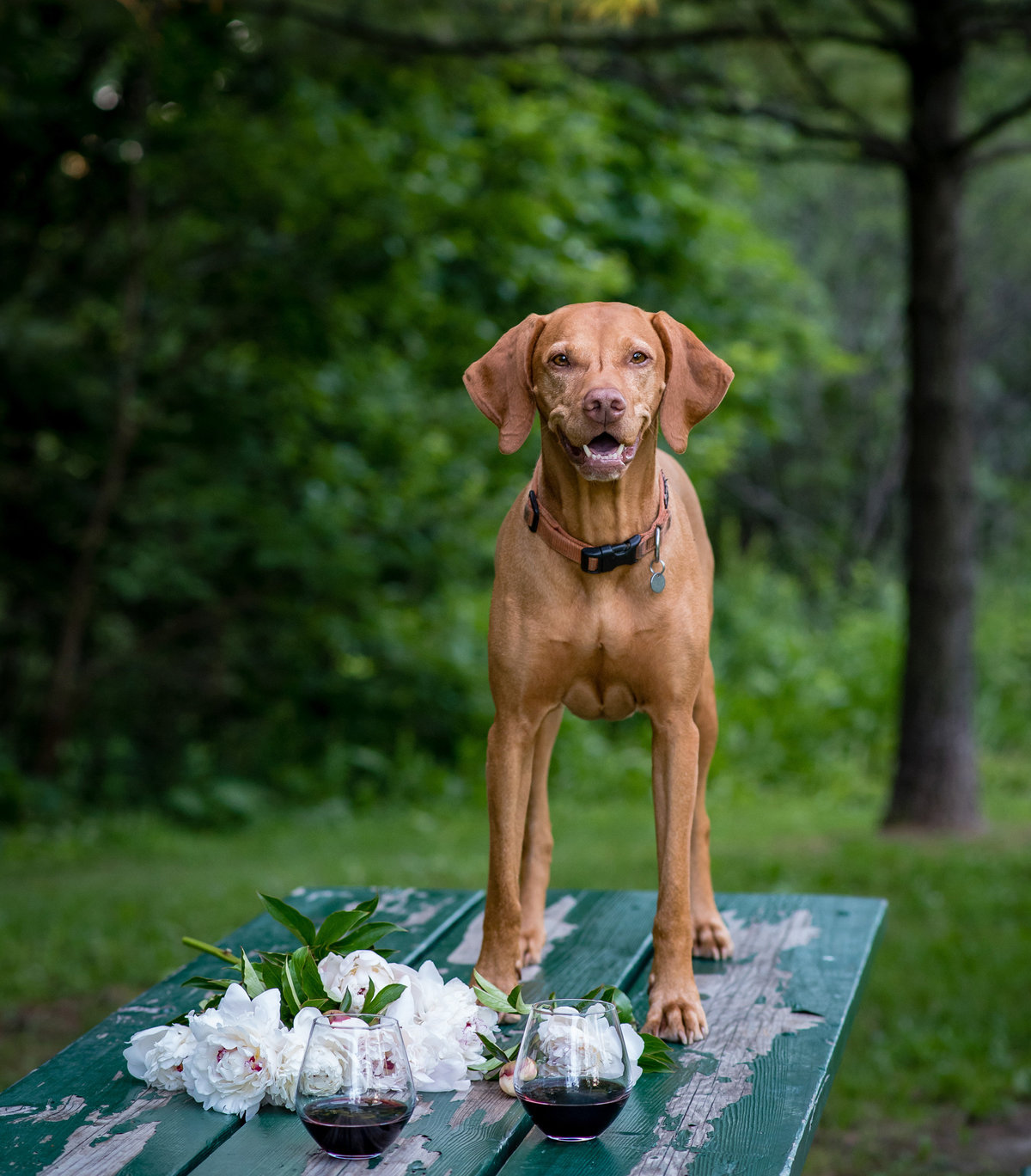 Smiling Vizsla dog on a picnic table with flowers