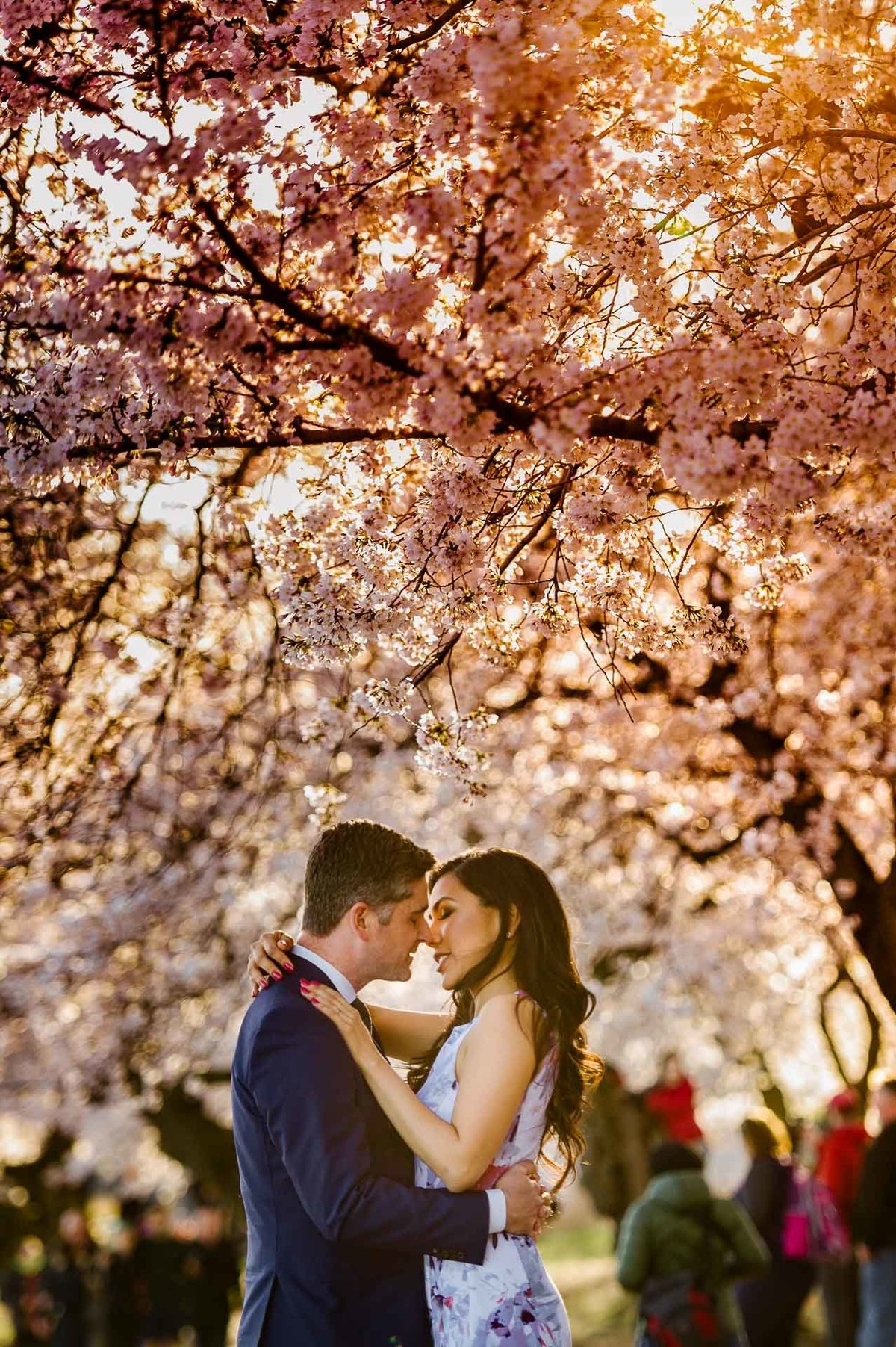 engagement photo with cherry blossoms in washington dc by stephane lemaire photography