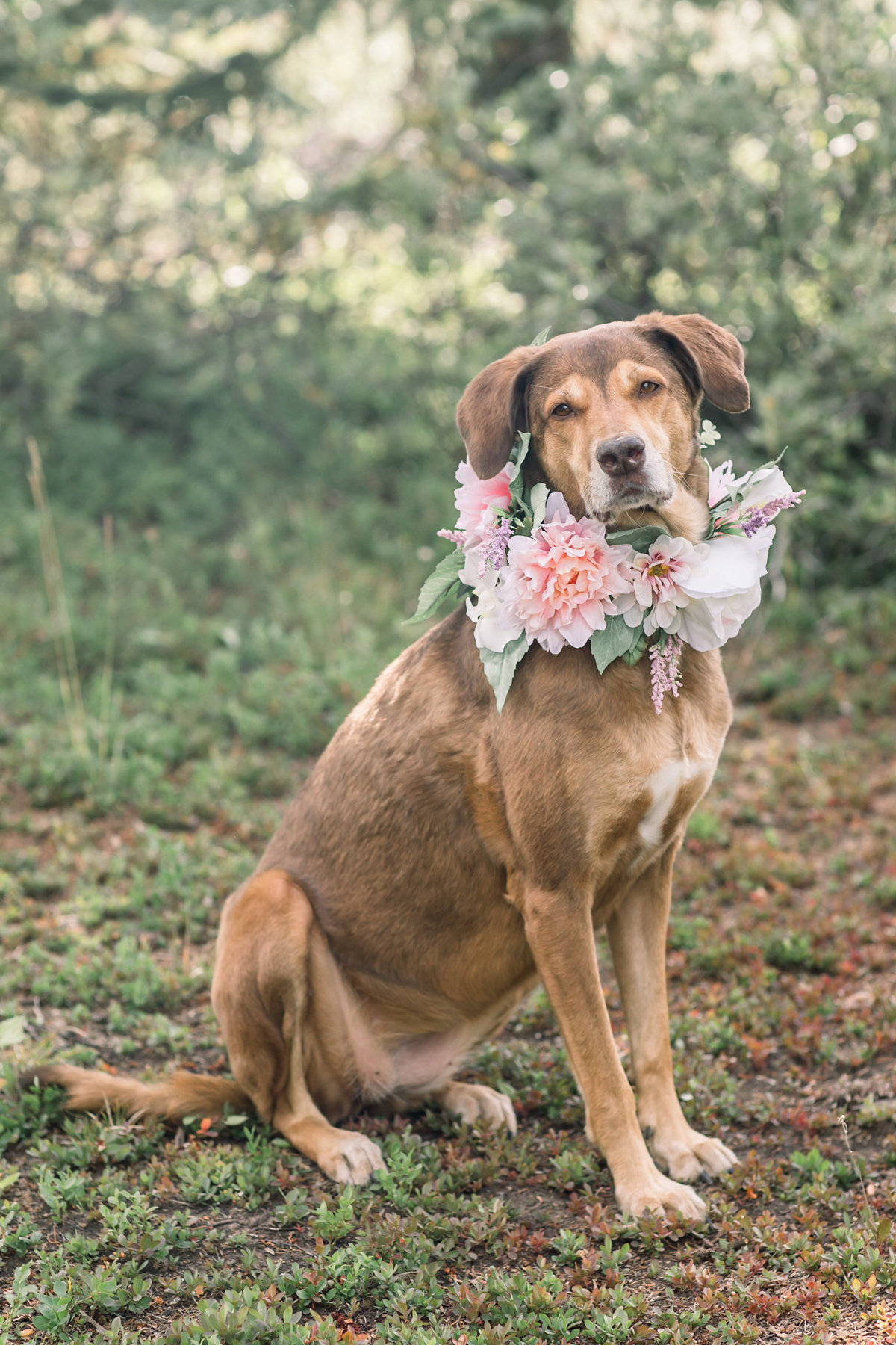 Dog wearing floral wedding wreath