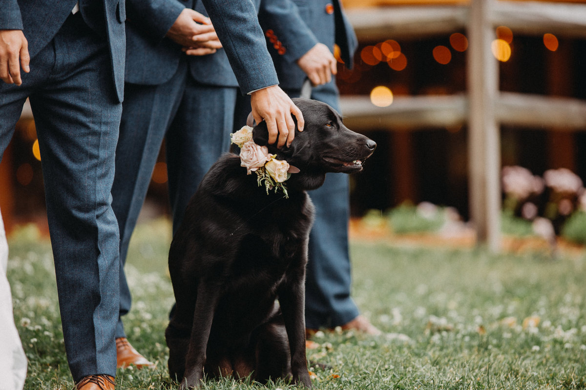 Dog watching bride walk down aisle