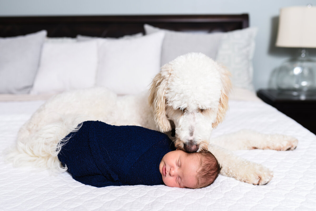 Beautiful lifestyle newborn photography: newborn boy lays on his parents bed with the family dog watching over him in MS
