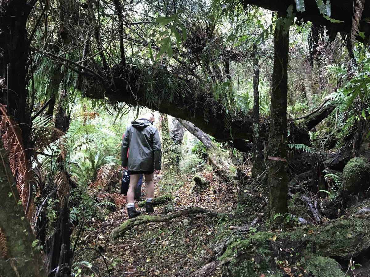 Hiking through the bush on Stewart Island, New Zealand
