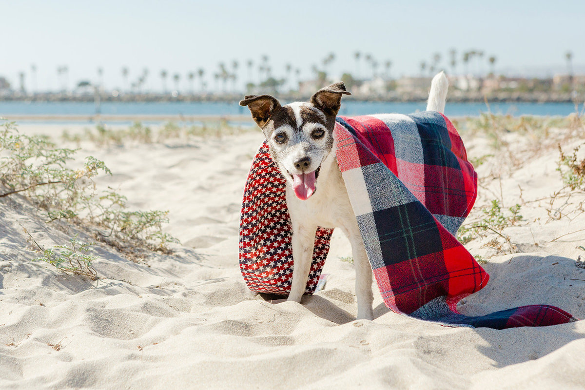 San-Diego-Pet-Family-Photographer-Ali-Peterson-Photography_0021