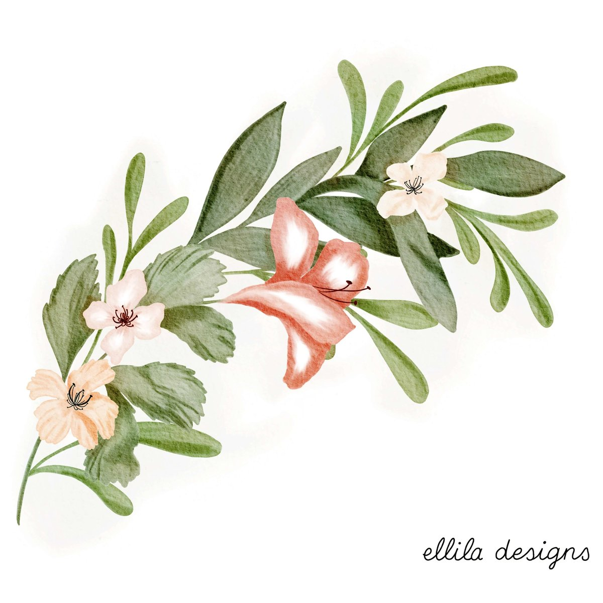 Flowers illustration Ellila Designs