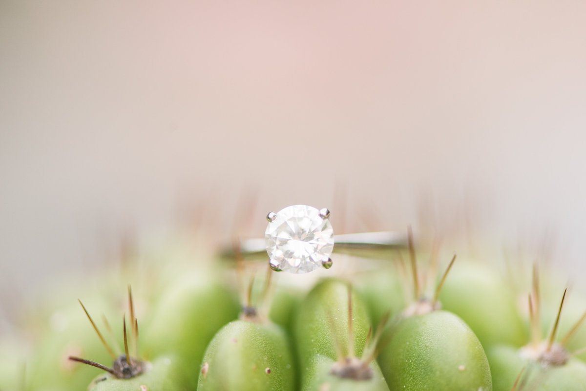 a single circle cut diamond engagement ring sitting on top of a green cactus with a pink background at Sarah P Duke Gardens in Durham