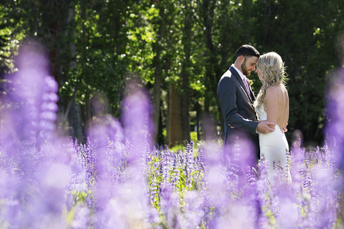 Wedding photos at Lake Tahoe lupins fields