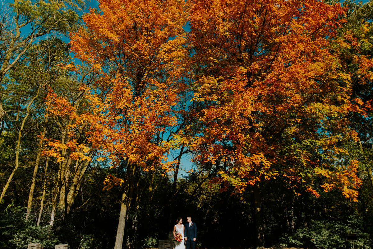 A bride and groom portrait on a beautiful fall day under a bright orange tree