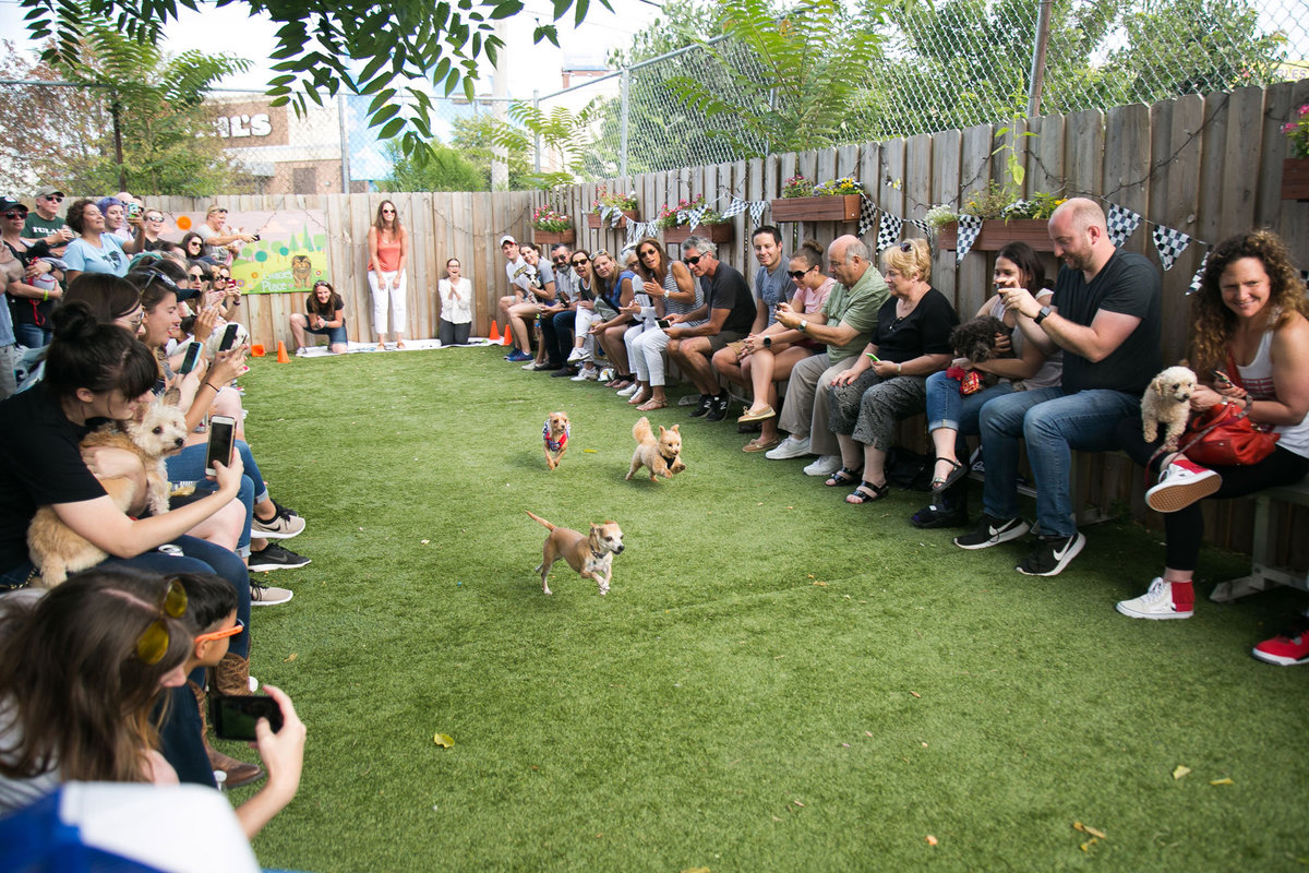 chicago-event-photography-featherlite-studios-OTAT-Tiny-Dog-Race-0137