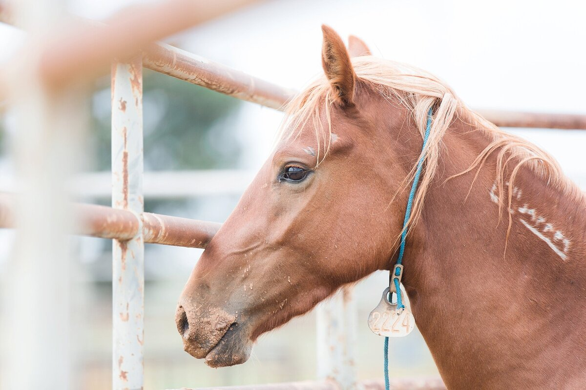profile photo of a mustang horse in blm holding