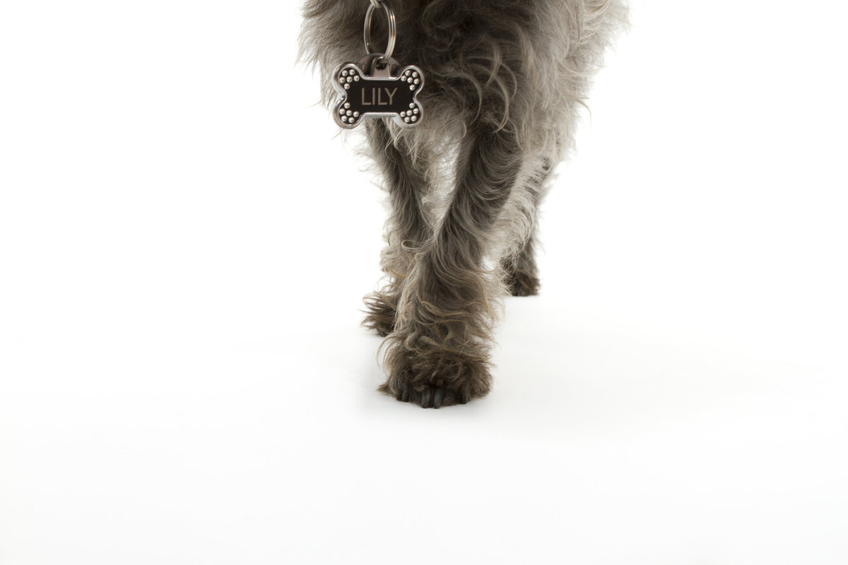 best studio san diego pet photography 3