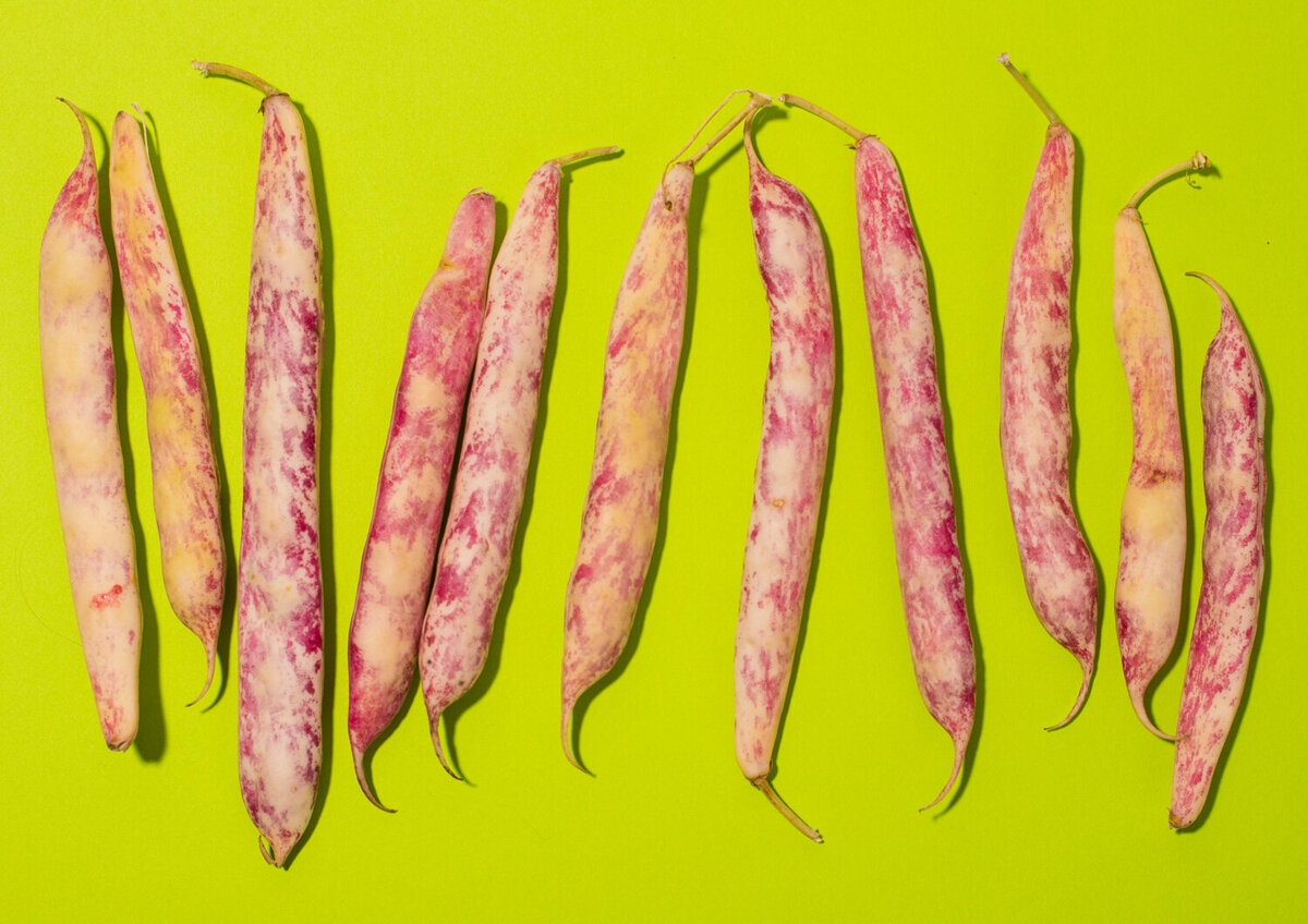 cranberry beans specialty produce