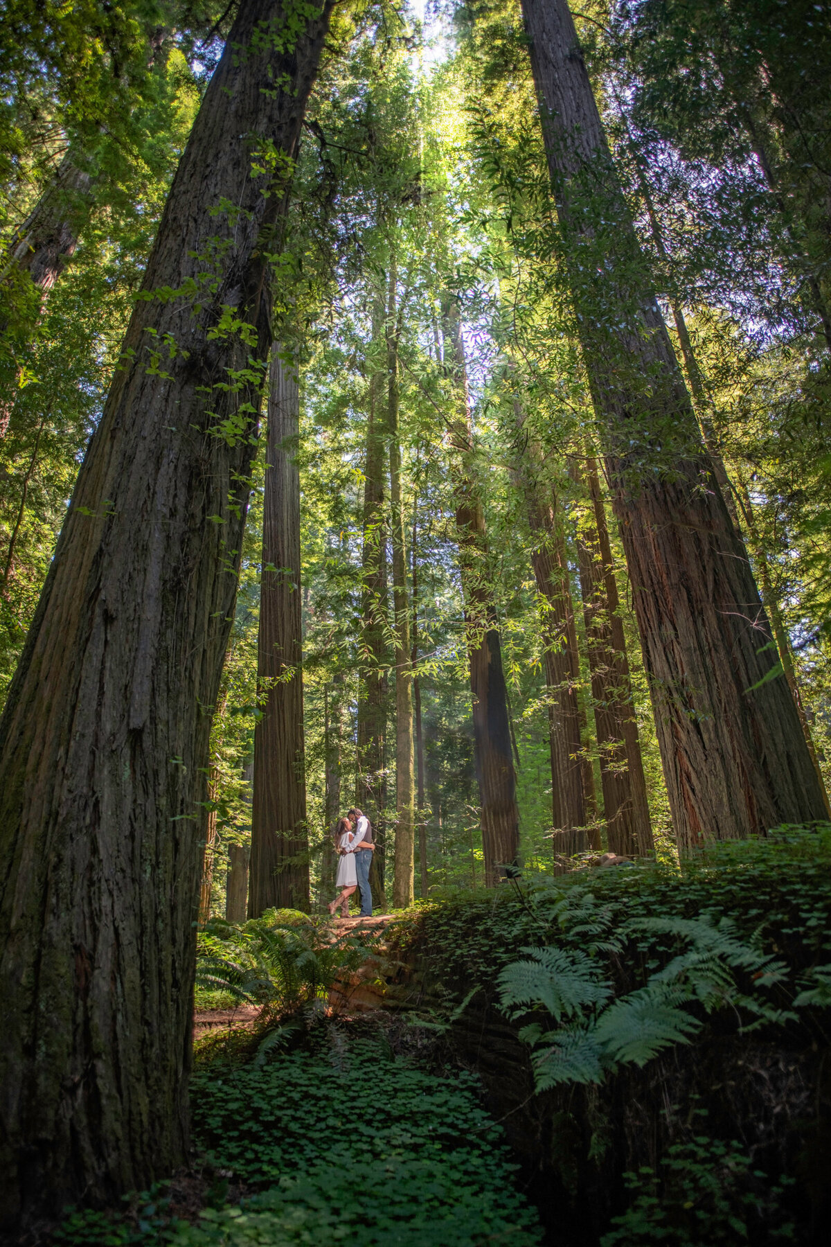 Humboldt-County-Elopement-Photographer-Redwoods-Avenue-of-the-Giants-Humboldt-Redwoods-Redwood-National-Park-Parky's-Pics-Coastal-Redwoods-Elopements-53