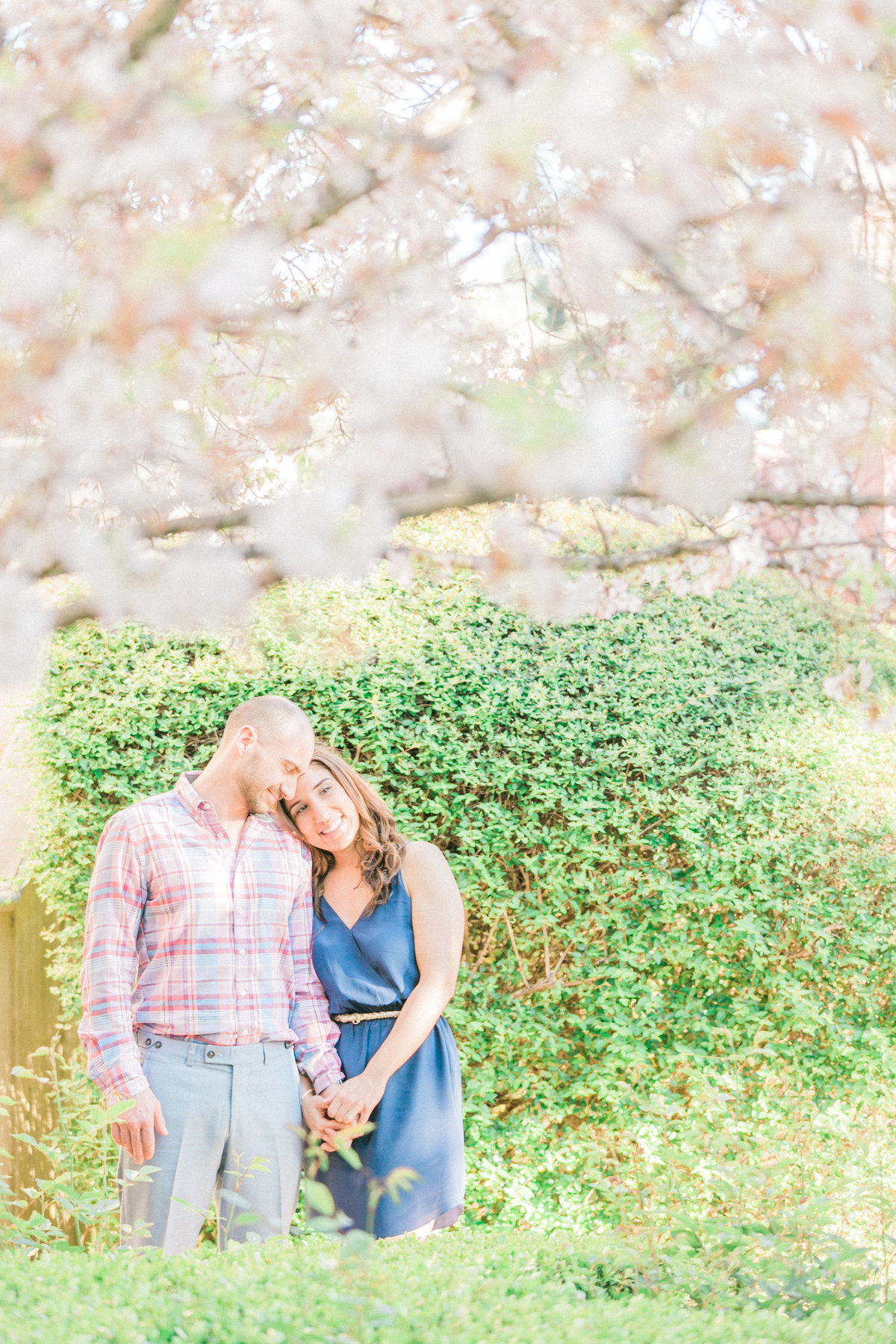 Napa Valley Engagement Under Cherry Blossom Tree