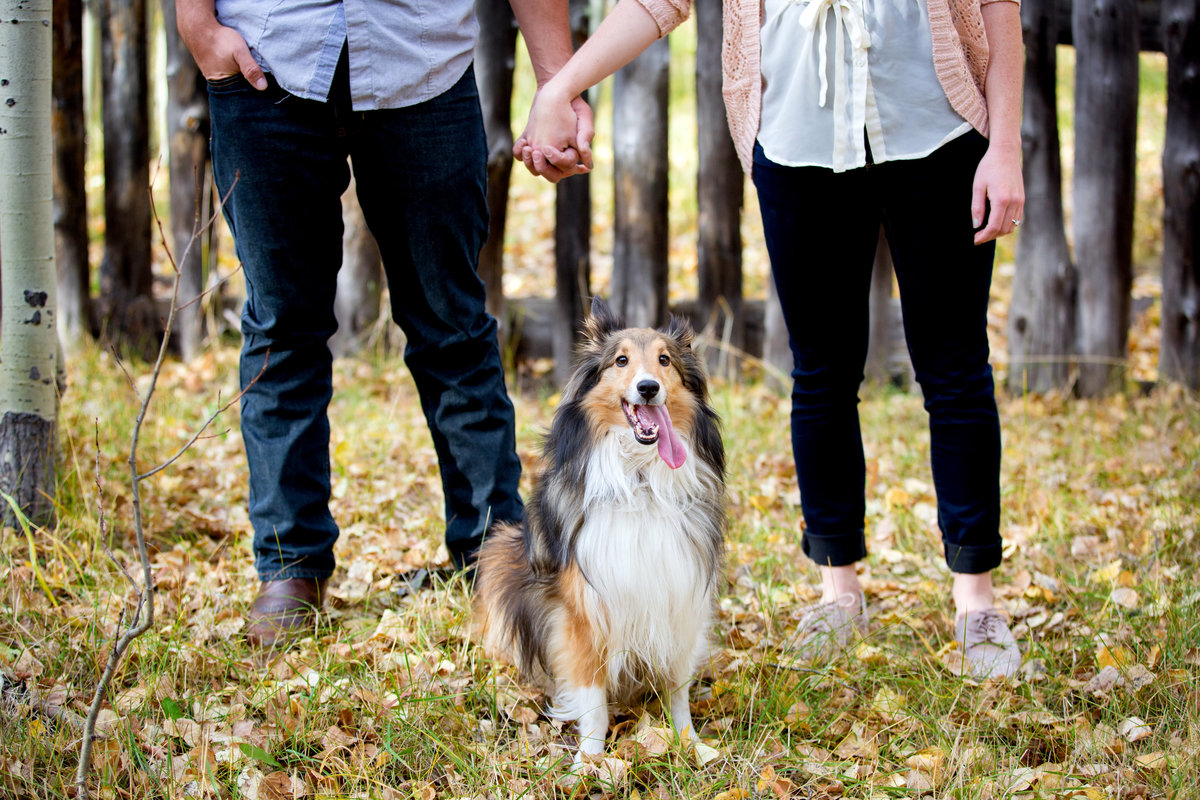 dog-engagement-photos-colorado