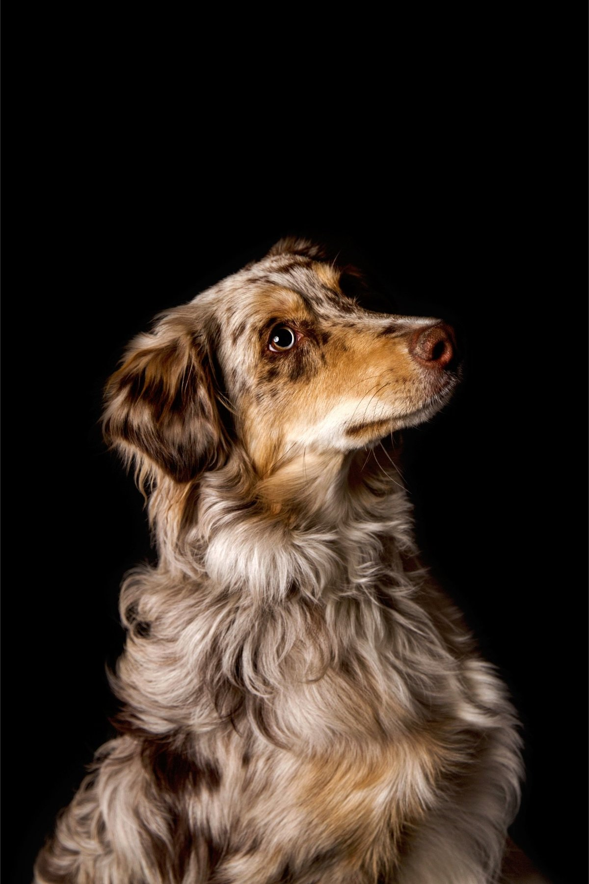 Alisa Messeroff Photography, Alisa Messeroff Photographer, Breckenridge Colorado Photographer, Professional Portrait Photographer, Pet Photographer, Pet Photography, Pet Portraits 6