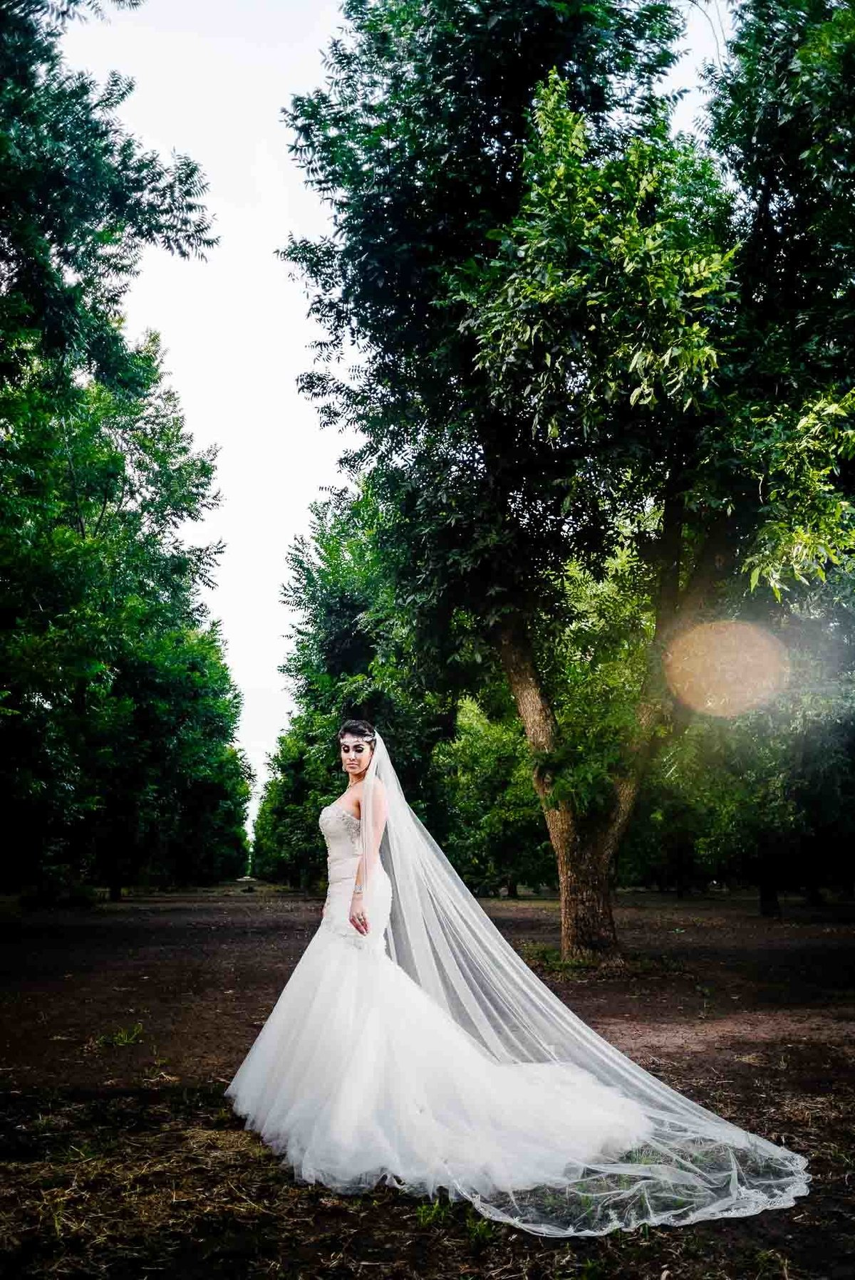 bride portrait in pecan farm by stephane lemaire photography