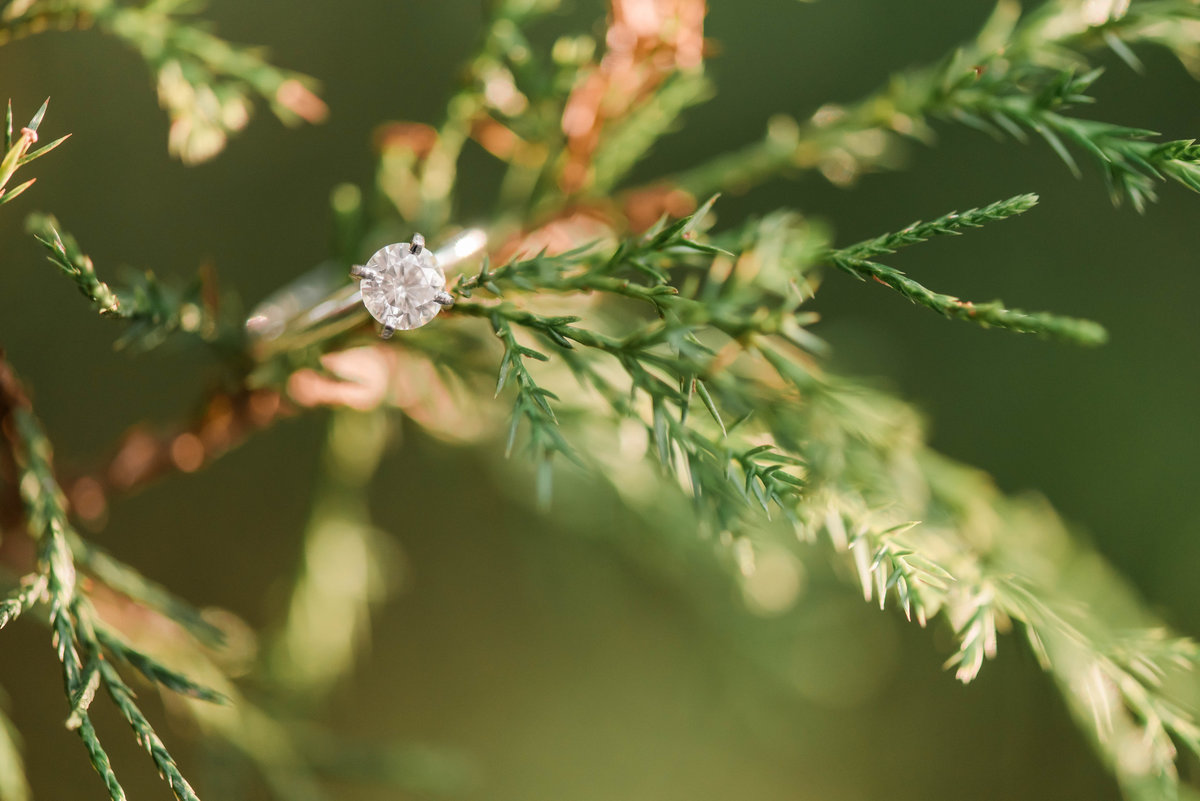 Hunter_Abbey_Engaged-7609