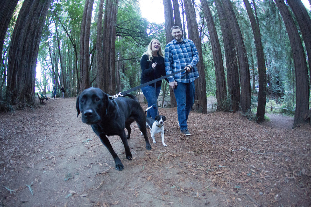 forest engagement shoot, engagement with dogs