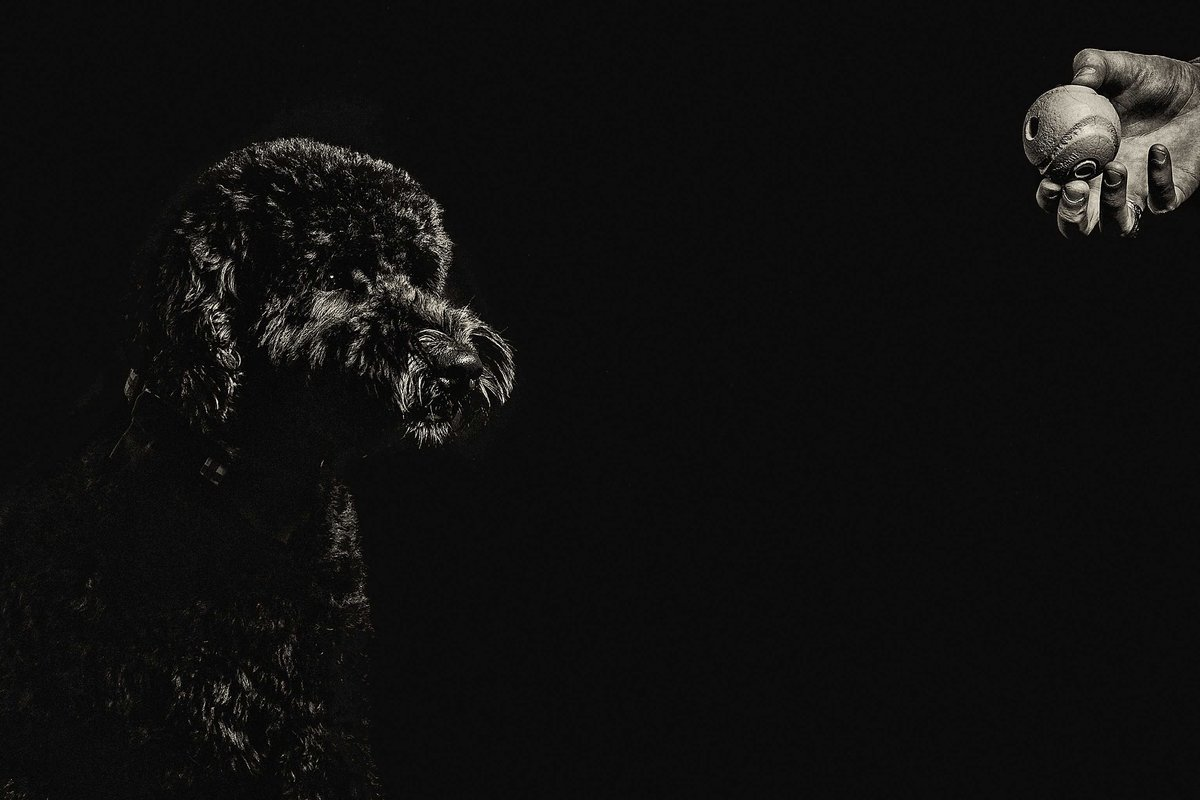 Black-Golden-Doodle-Ball-Pet-Photographers-in-Charleston-SC-Fia-Forever-Photography-C64A6258-Sig-6029