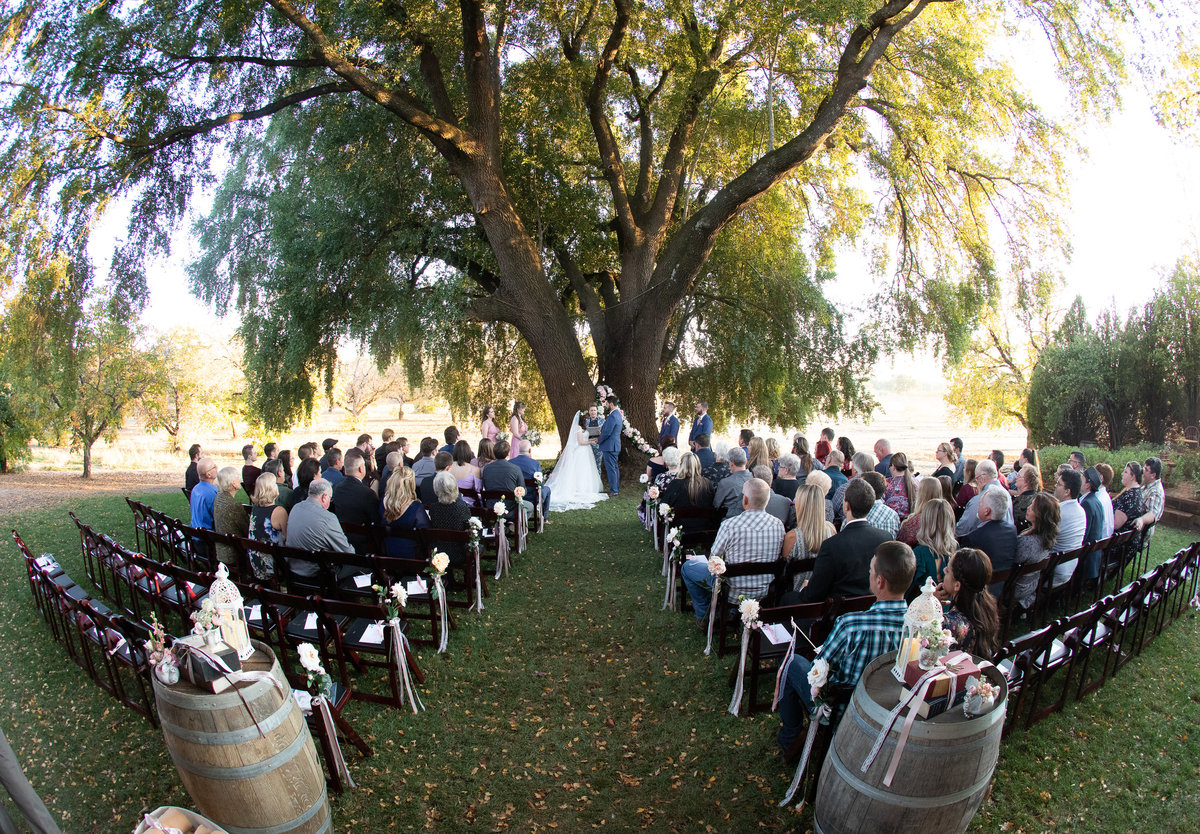 weddings under oak tree