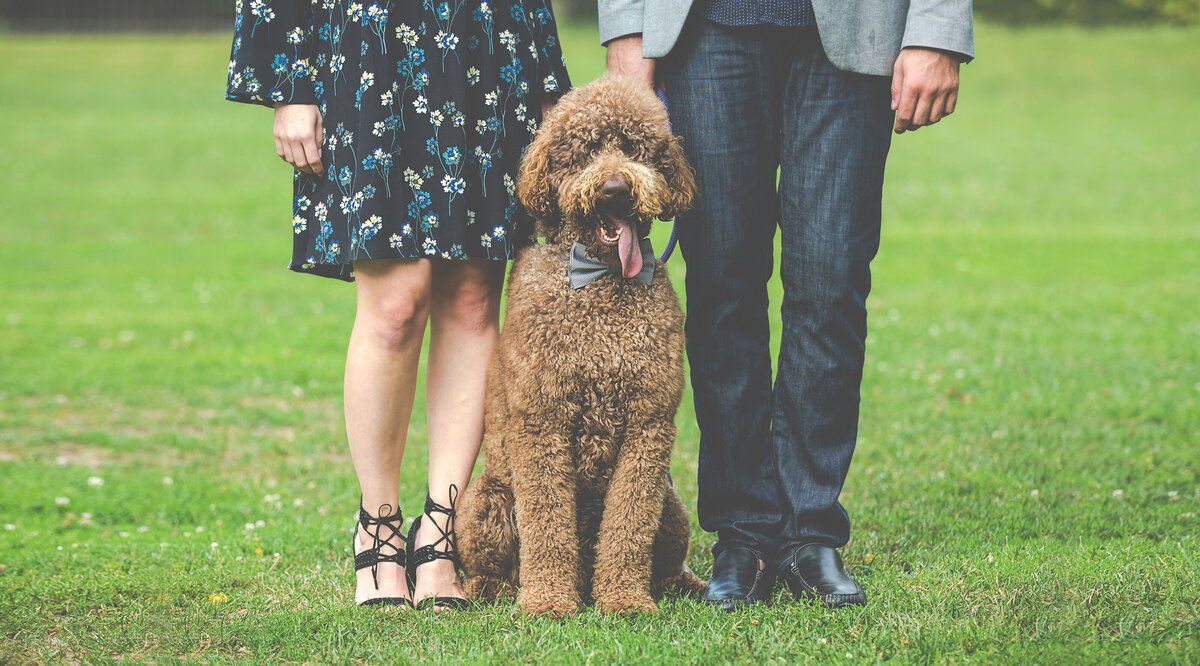 A portrait of a dog wearing a tie, standing between his parents.