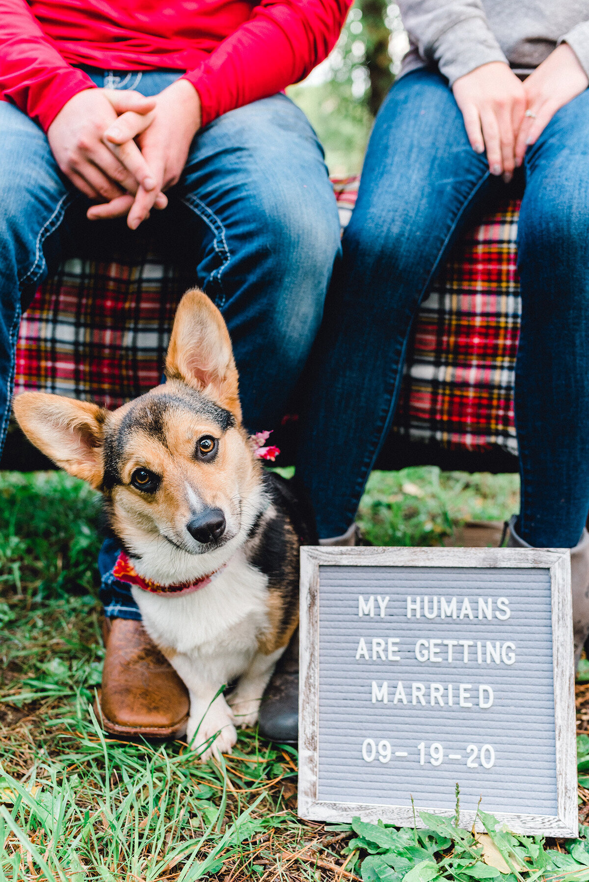 adorable corgi save the date in omaha