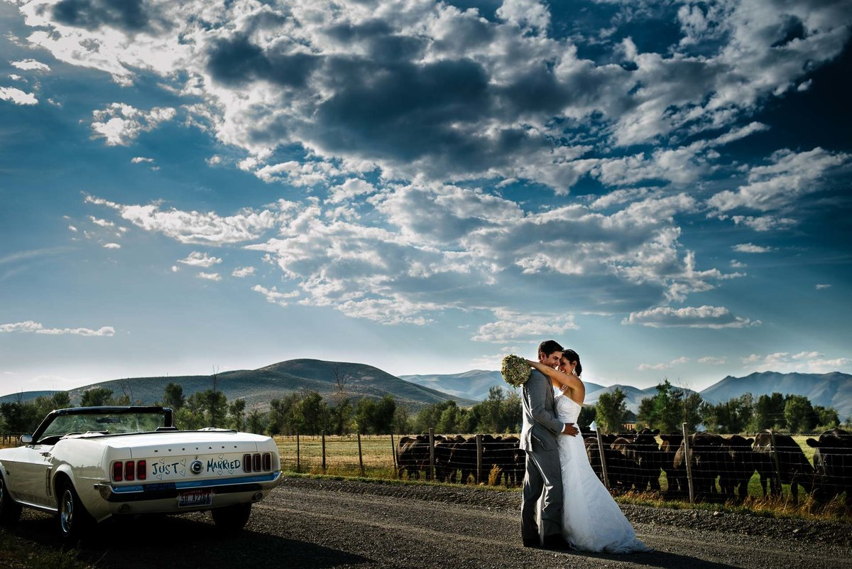 ranch wedding with cattle