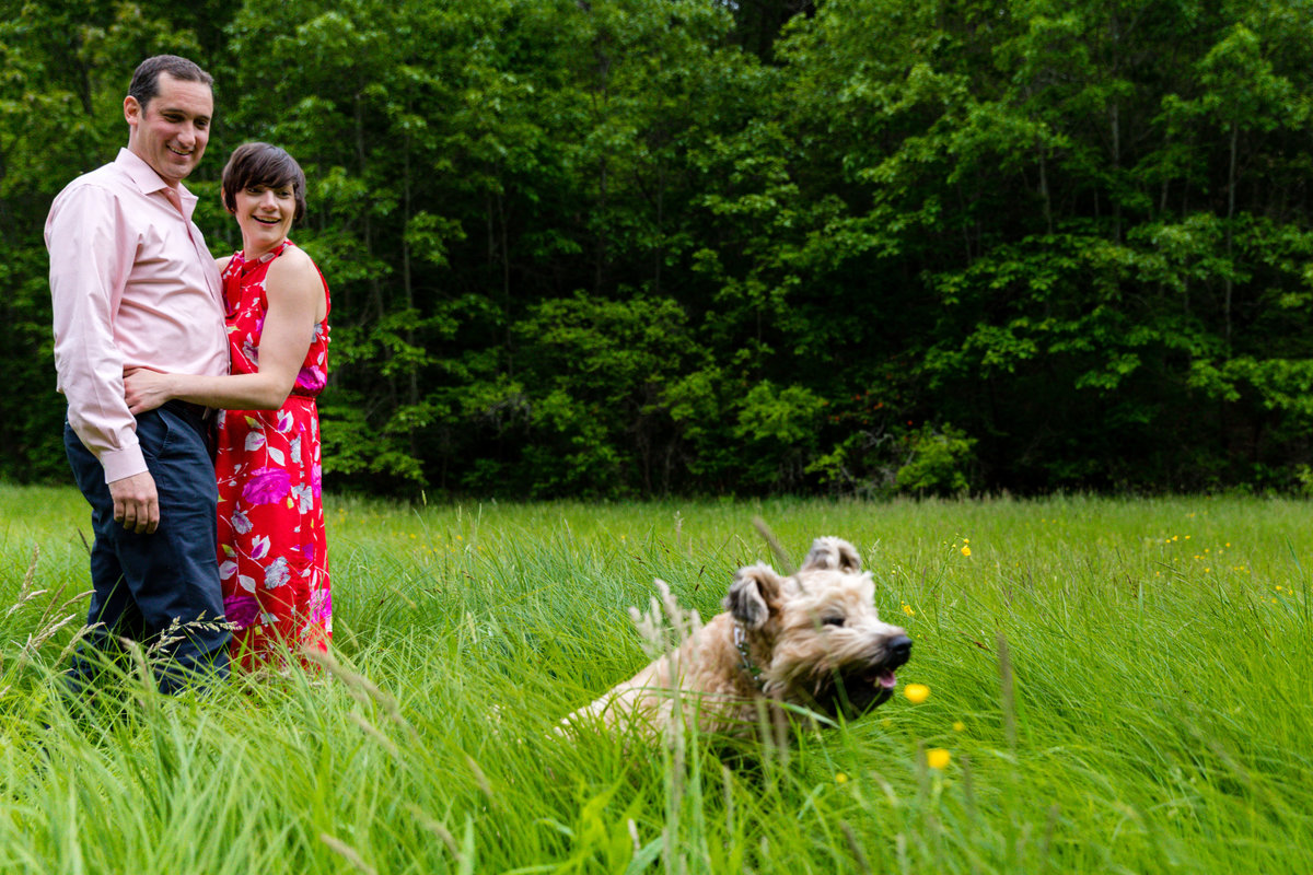 The engaged couple laughs as their dog runs through the tall grass at Hardy Farm Maine