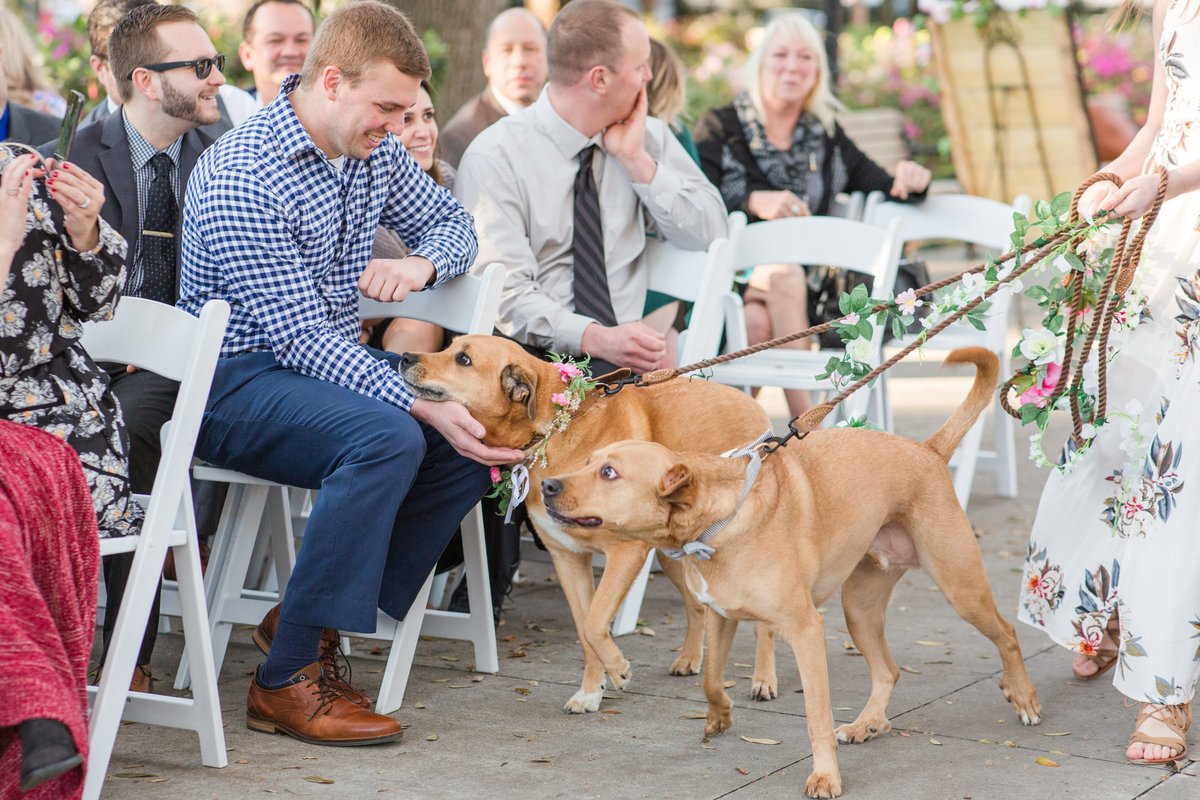 dogs walking down aisle at wedding