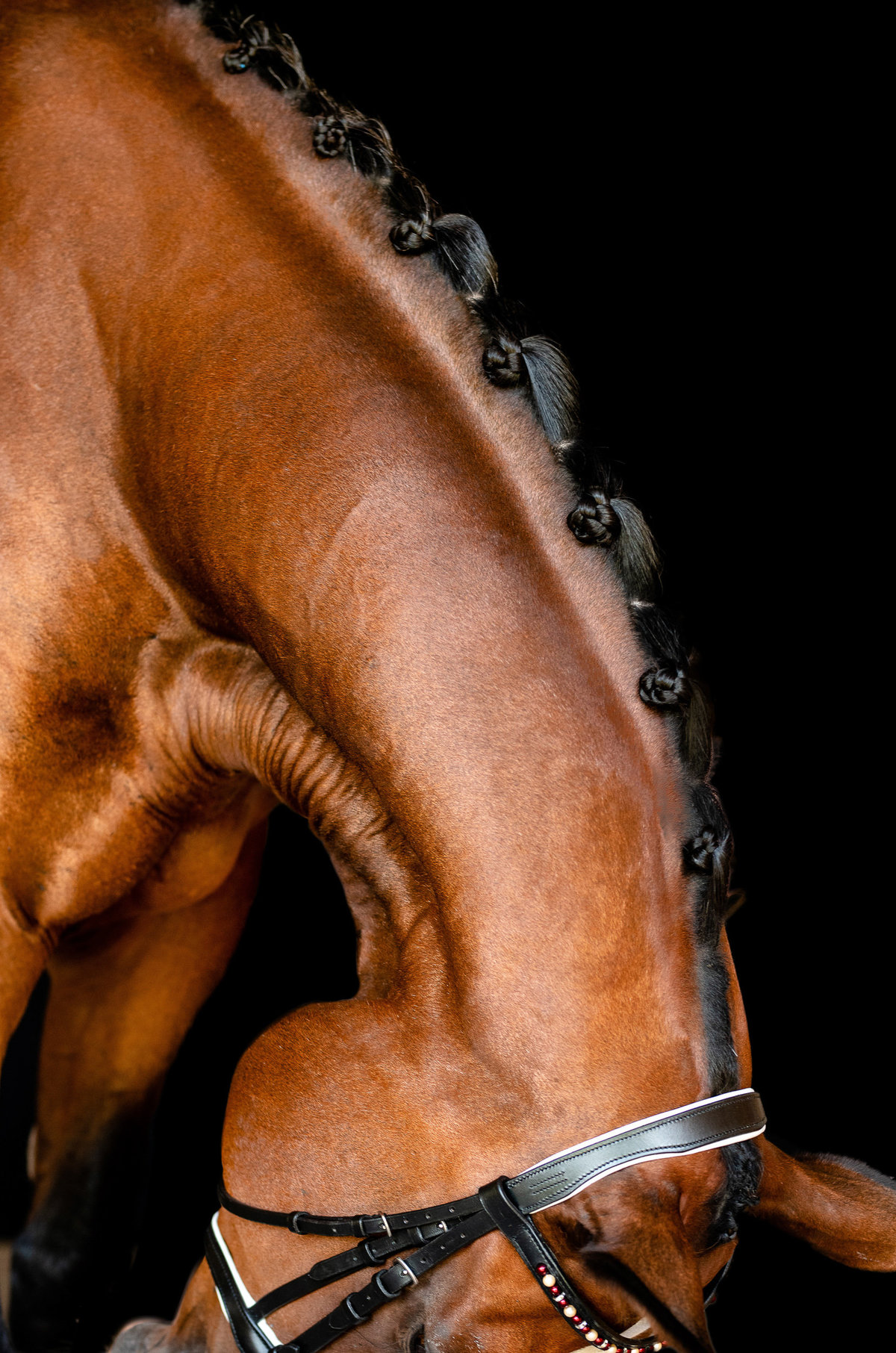 Fine art photo of dressage braids taken by Florida horse photographer