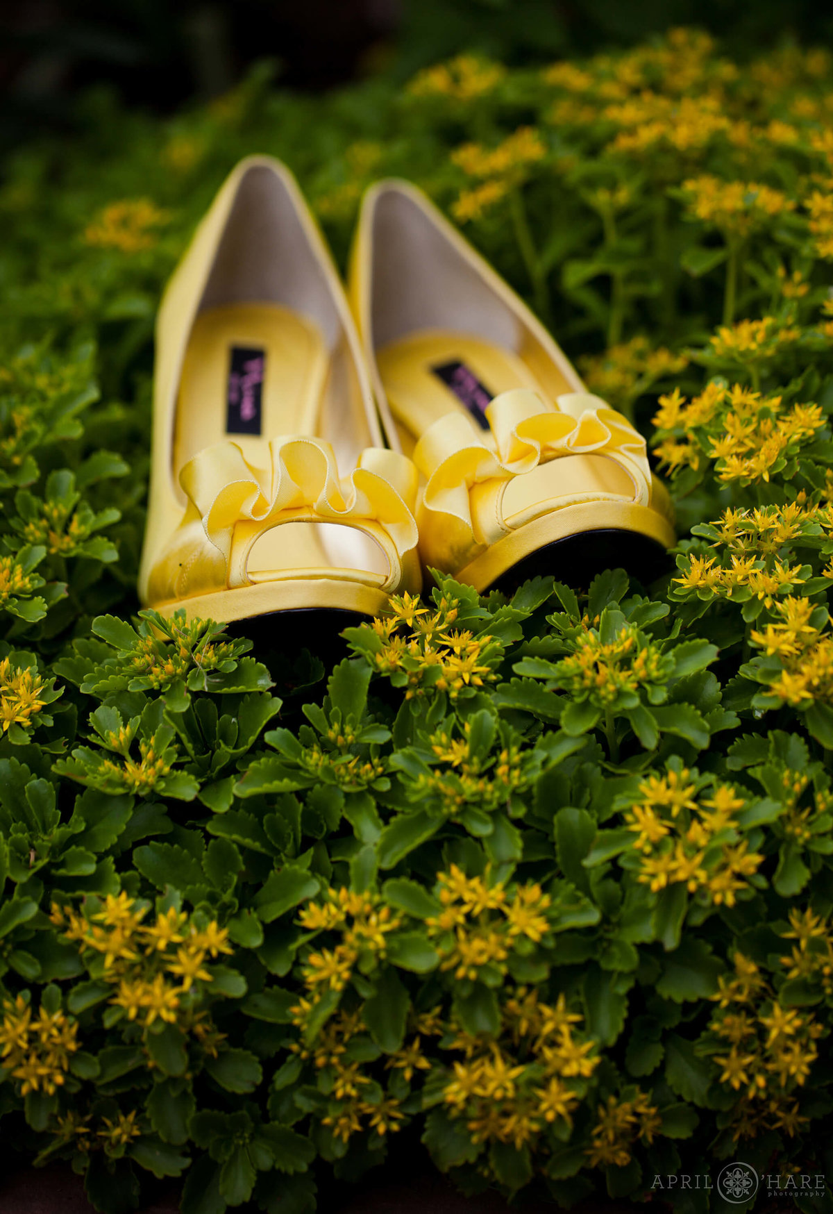 Colorado Wedding photographer detail photo of Sunshine yellow heels in the garden at Chatfield Farms Denver Botanic Gardens