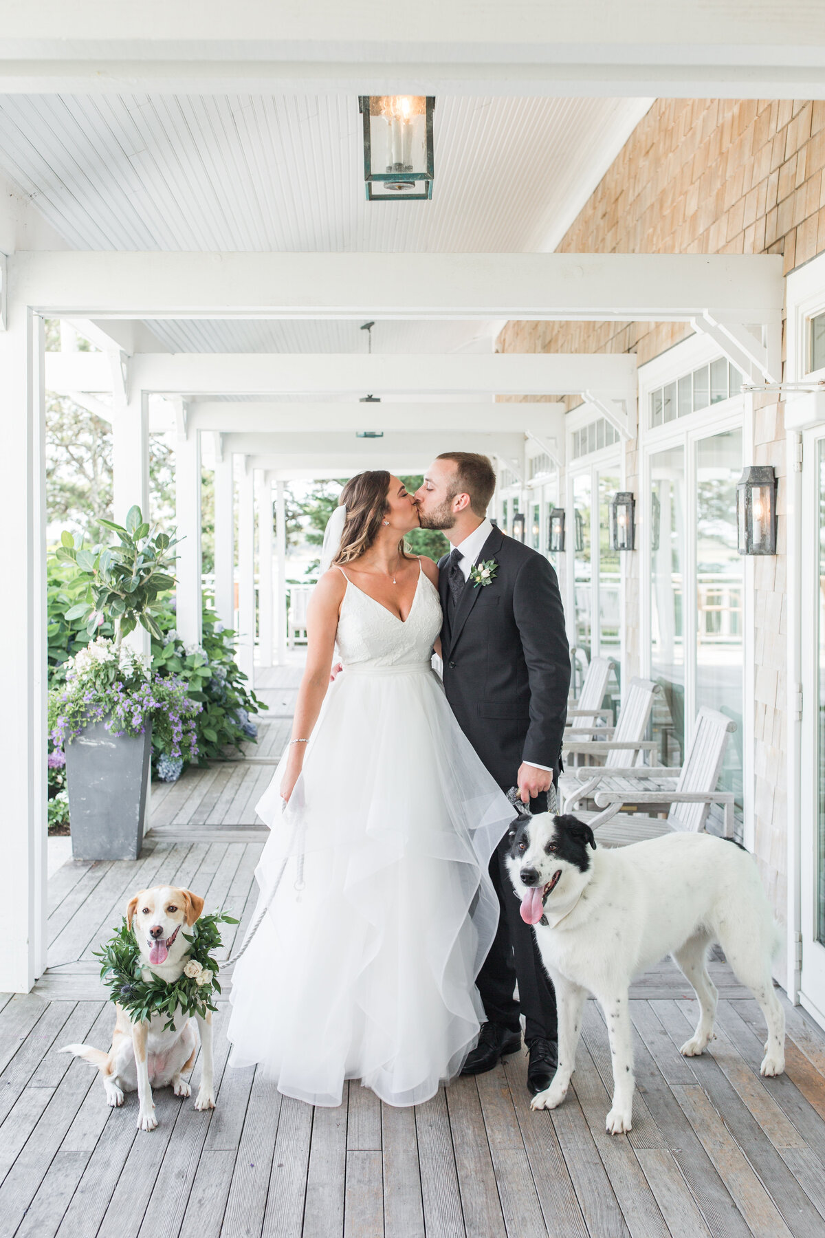 Bride and Groom kissing with their dogs