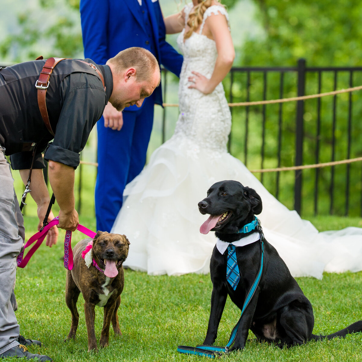 Behind the scenes with Travis and dogs at wedding