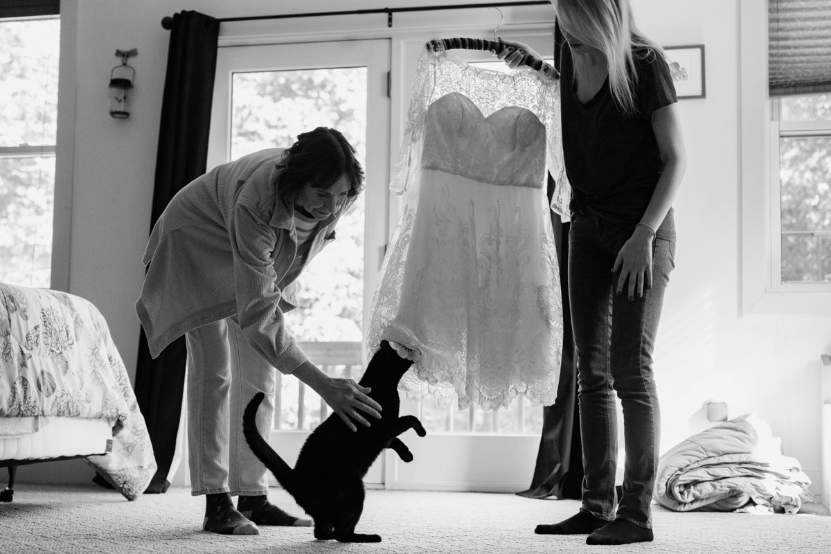 The family cat rubs on the bride's dress at her backyard elopement in Dover NH