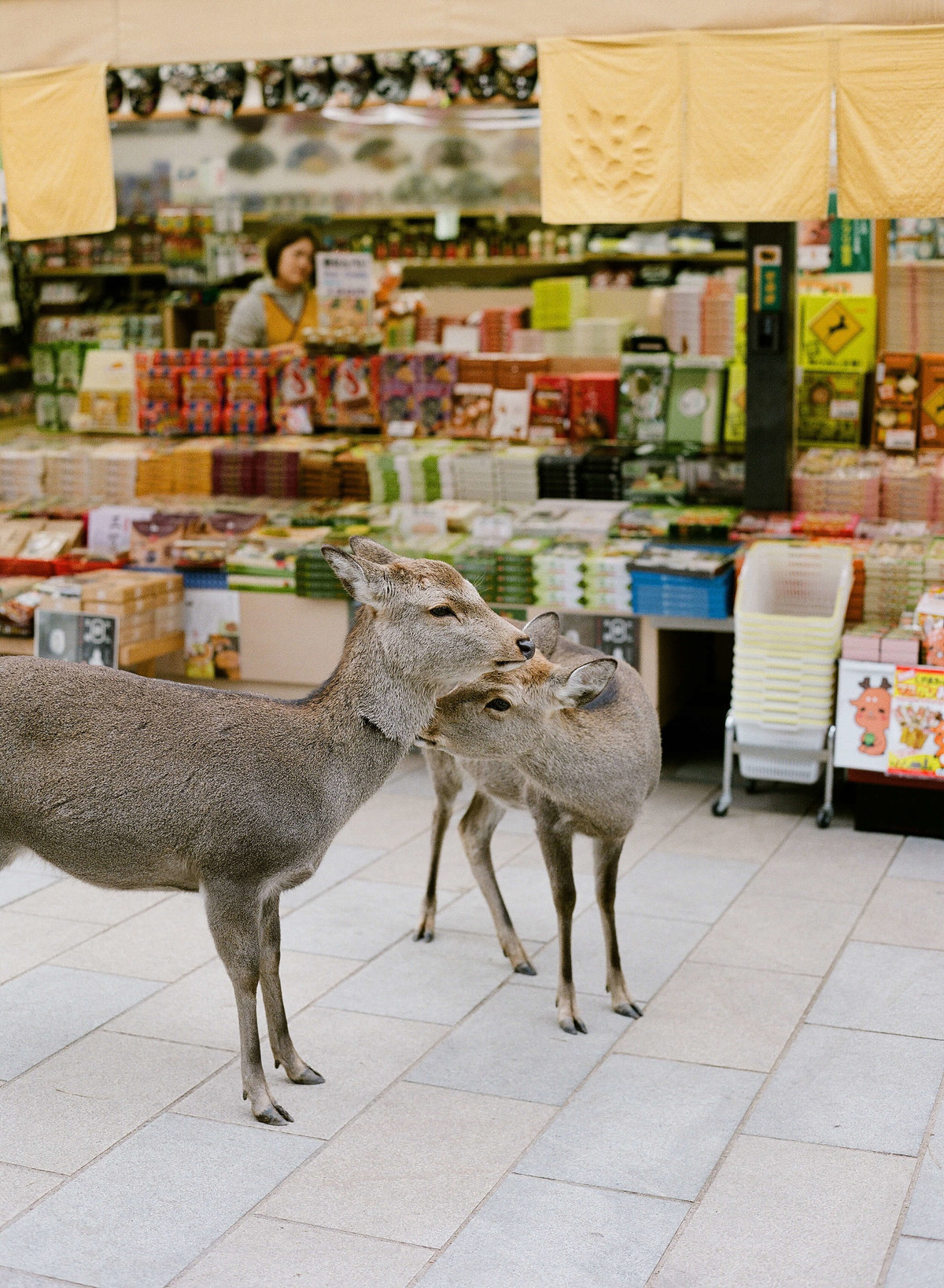 3-KTMerry-weddings-japanese-deer