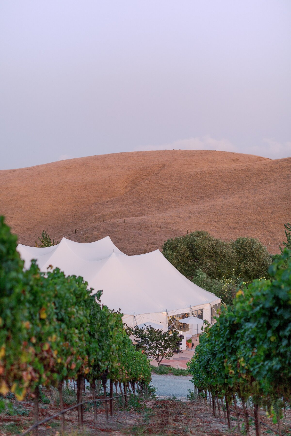 20190928Cammane and Simon's Vineyard Wedding_Nella Terra Cellars_Sunol_Bethany Picone Photography - 386_WEB