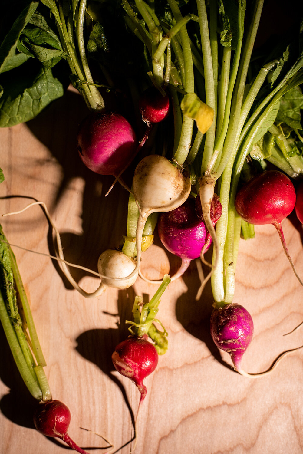 easter egg radishes still life