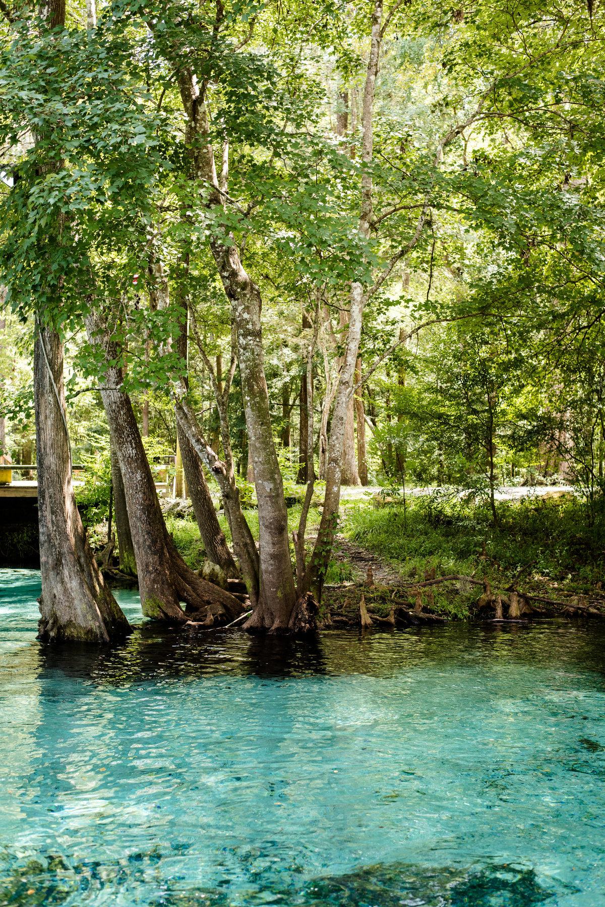 ginnie springs florida