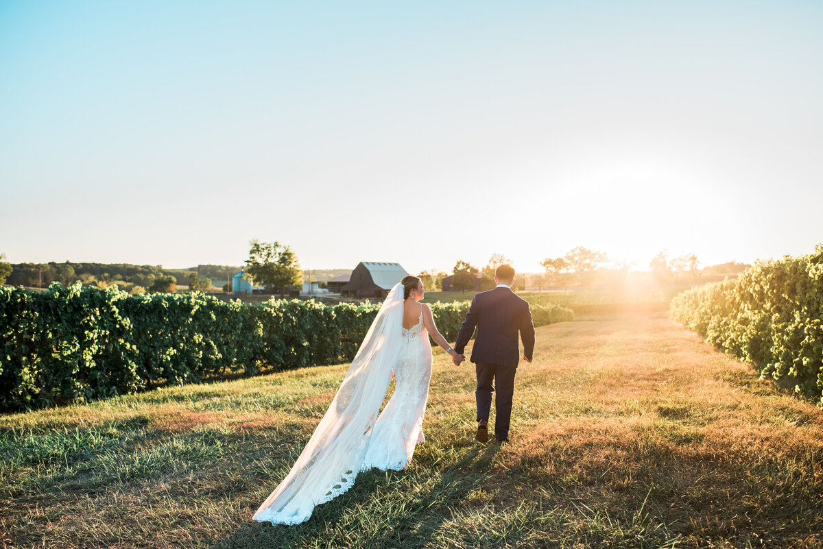 Wedding couple in vineyard at sunset