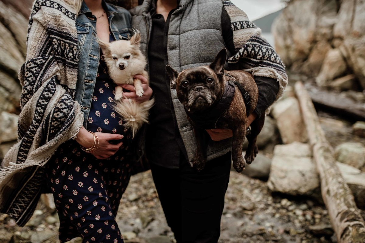 Maternity photography with dogs
