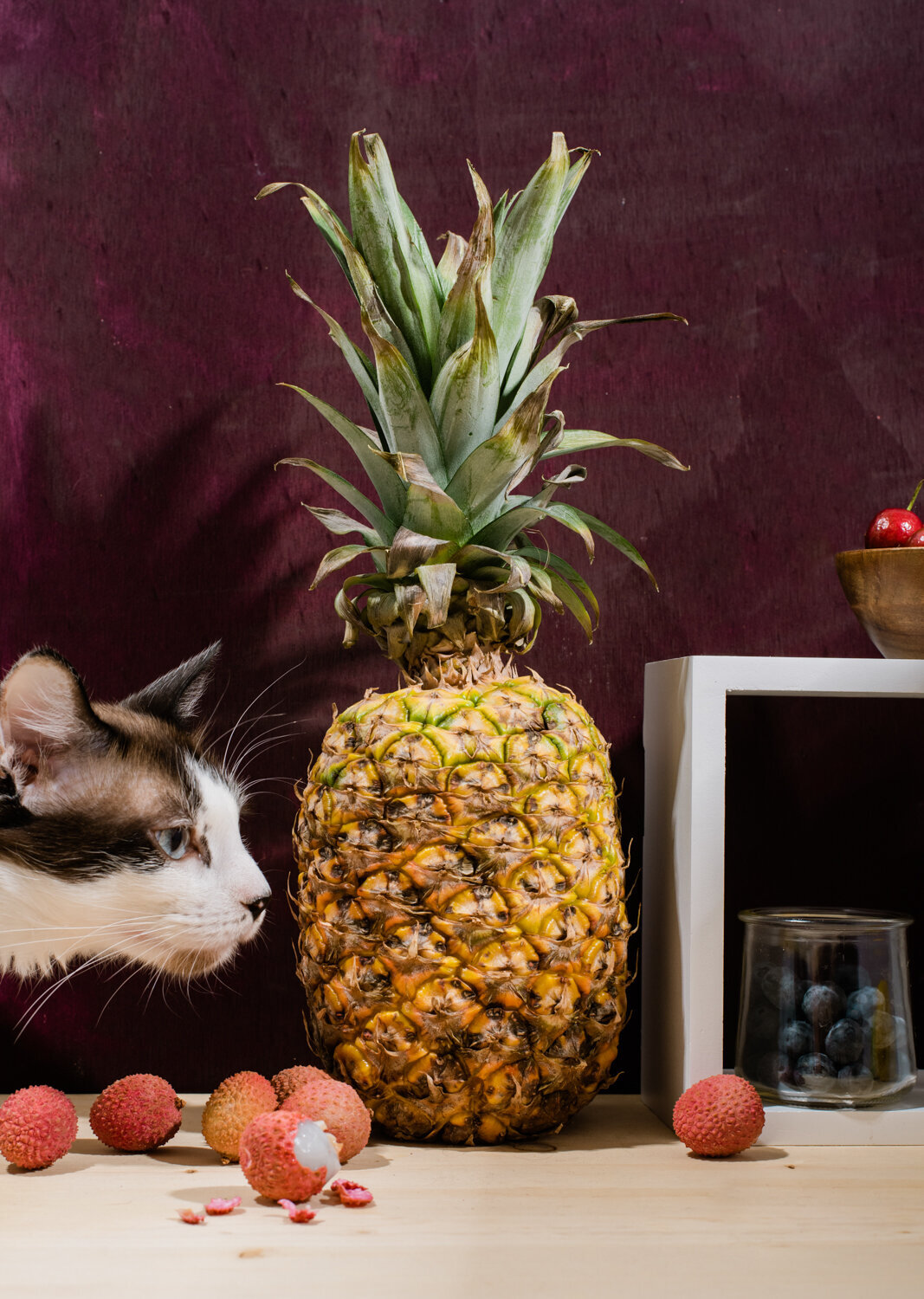 cat still life with pineapples and lychee