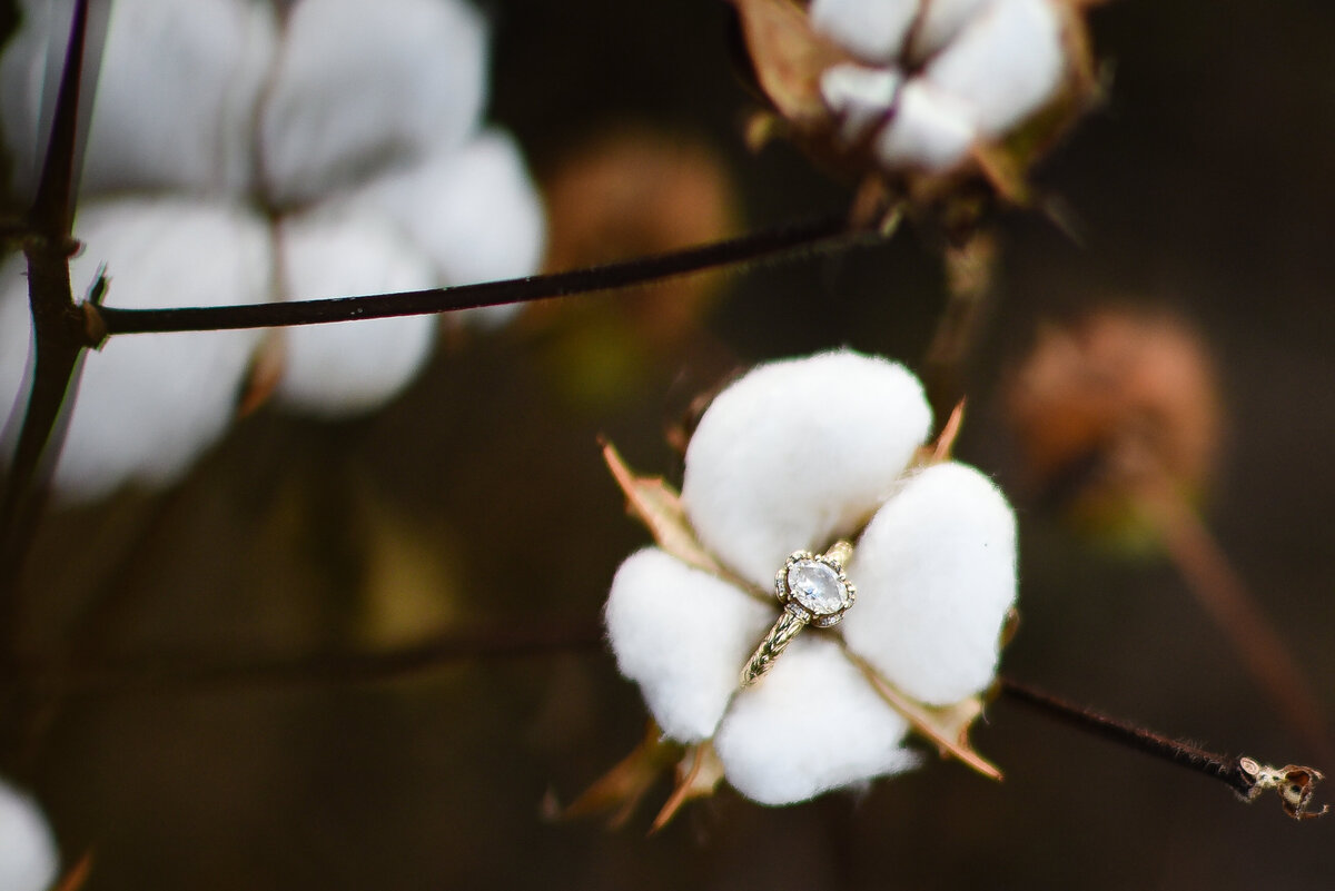 Beautiful Mississippi Engagement Photography: engagement ring in cotton field on a cotton boll, southern wedding photography