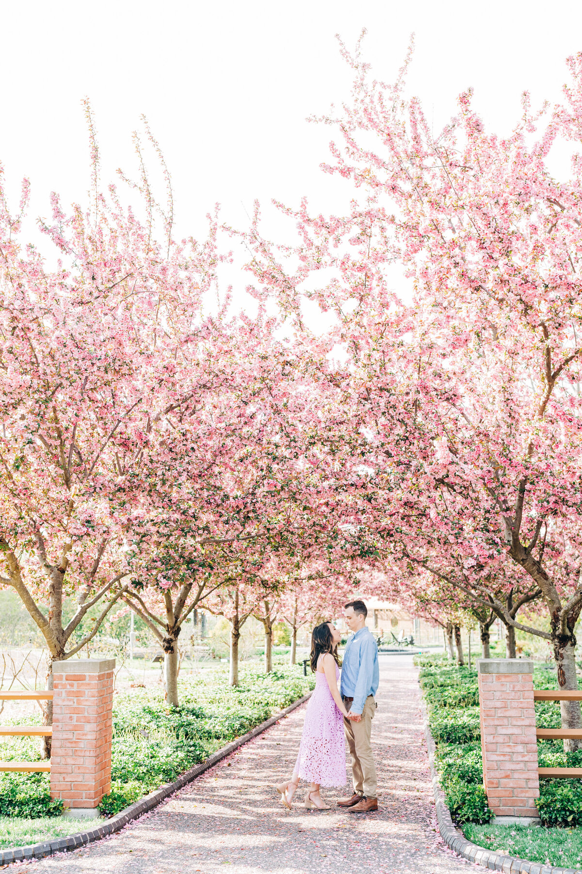 Dorothy_Louise_Photography_Maria_Nick_Missouri_Botanical_Garden_Engagement-7482
