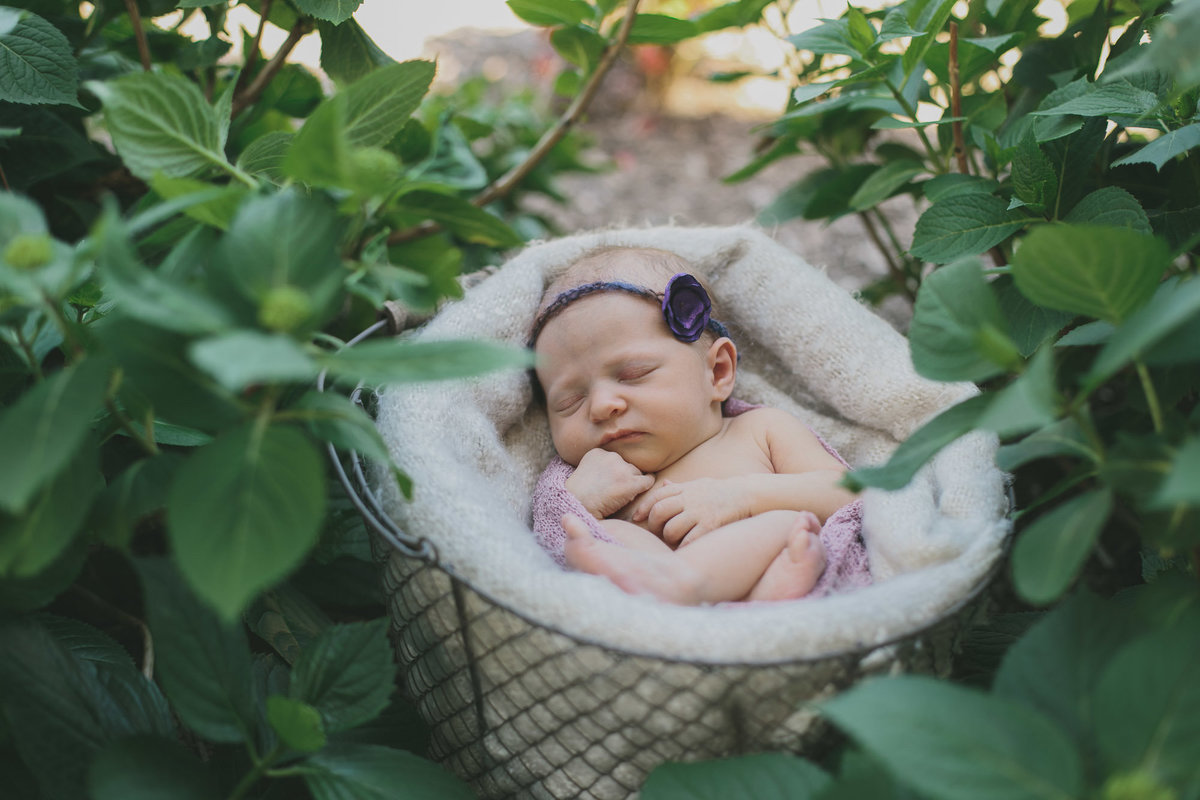 raleigh-Newborn-photographer-olivia61022