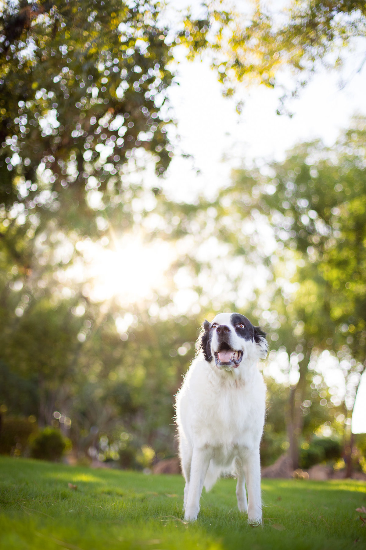Phoenix AZ Pet Photography_21