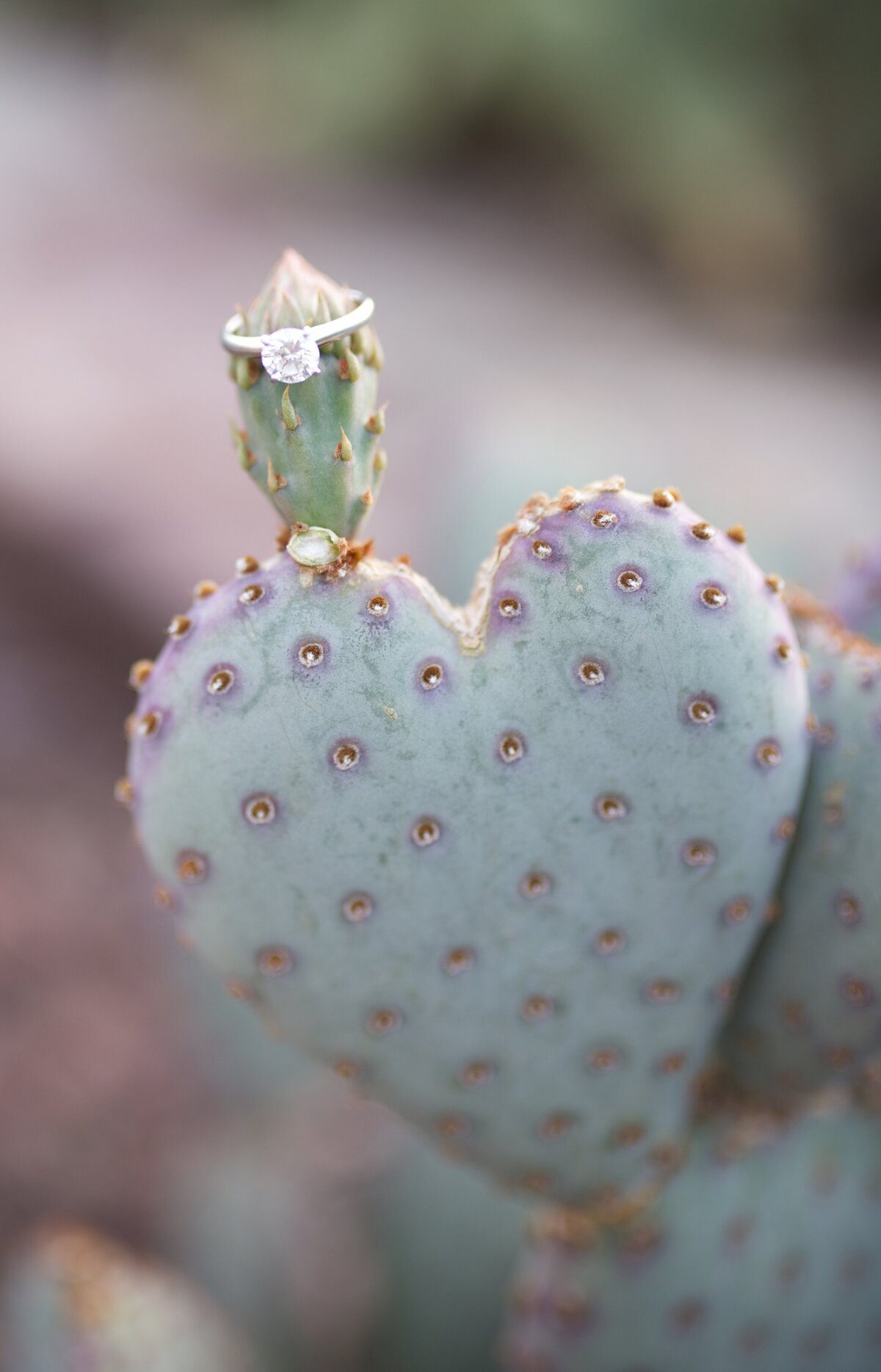 wedding ring on a cactus