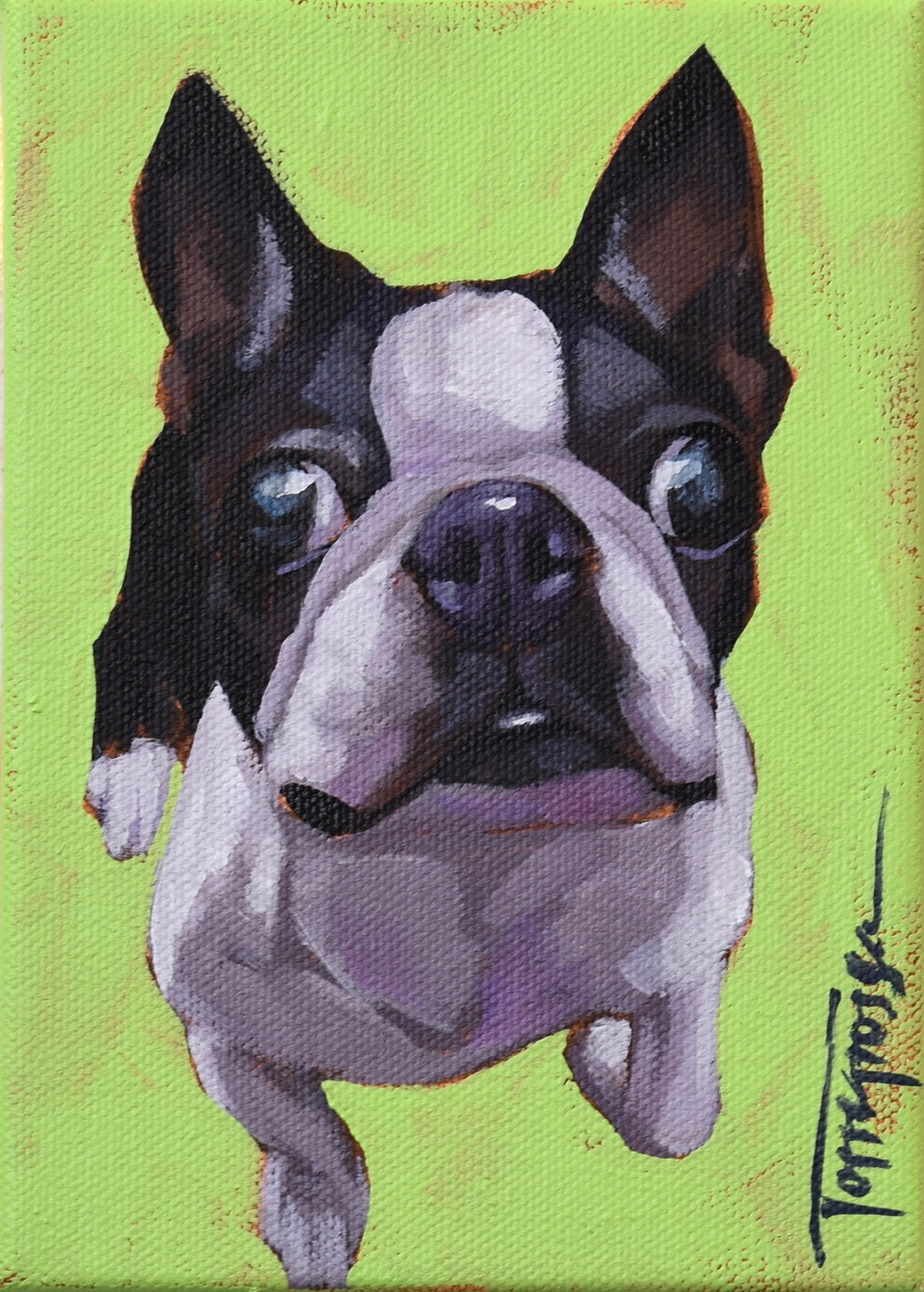 Torregrossa Fine Art Custom Pet Portrait by Stephanie T Gaffney BostonTerrier